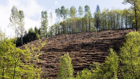 Wald in Nordrhein-Westfalen (dpa)