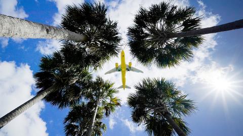 Ein Passagierflugzeug landet am Flughafen Tampa im US-BundesstaatFlorida und ist dabei vom Boden aus über den Wipfeln von Palmen zu sehen (Archivbild). (dpa)