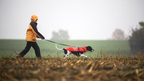Eine Frau geht mit ihrem Hund im Regen spazieren. (dpa)
