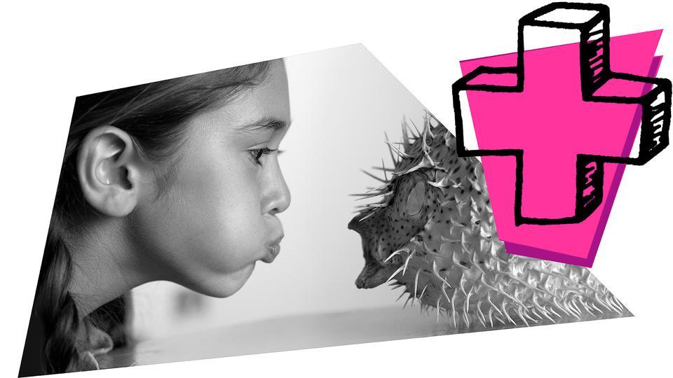 Mädchen pustet auf Stachelfisch und Grafil