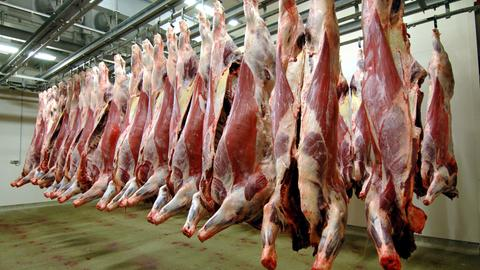 Im Kühlraum eines Schlachthofs hängen Rinderhälften für die Verladung bereit.