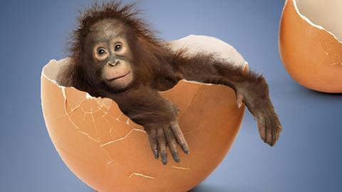 Kleiner Affe in Eierschale