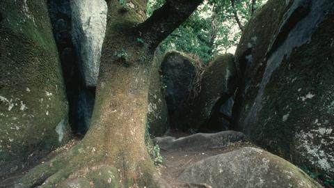 Fôret de Huelgoat, Felsen im Wald Fôret de Huelgoat (Westzipfel der Fôret de Brocéliande