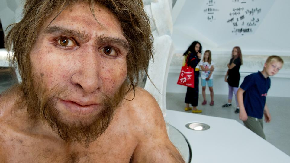 Modell  Homo Heidelbergensis