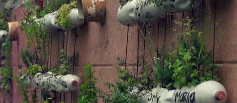 Pflanzen wachsen aus Plastikflaschen