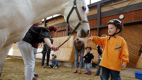 Pferd schnuppert an Hand von kleinem Jungen