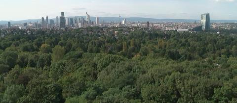 Blick auf die Frankfurter Skyline vom Grüngürtel aus