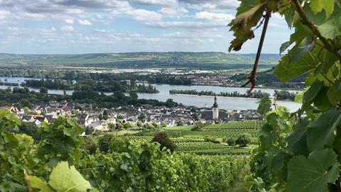 Blick auf Rüdesheim von der Jugendherberge Rüdesheim aus.