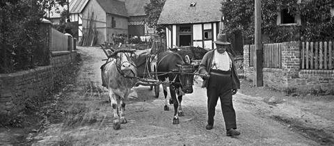 Kuhgespann in einem hessischen Dorf