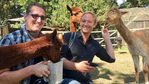Tobias Kämmerer und Alpakazüchter Patrick Lüft füttern Tiere