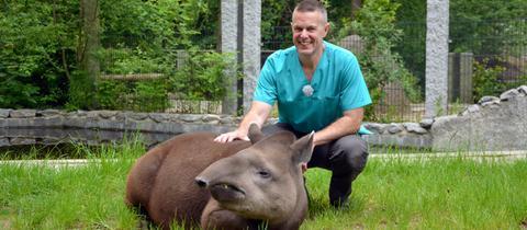 Tierarzt Thomas Fischer mit einem Tapir im Vivarium Darmstadt.