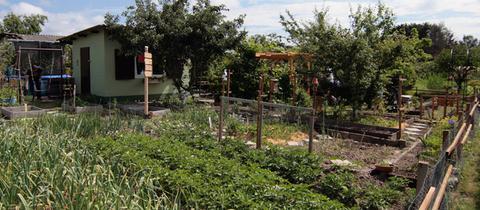Blick auf Magdalena Griegals Garten in Oberursel