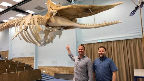 Tobias Kämmerer mit Prof. Dr. Volker Wissemann vor dem Pottwal-Skelett im Hörsaal der Hermann-Hofmann-Akademie der Justus-Liebig-Universität Gießen.