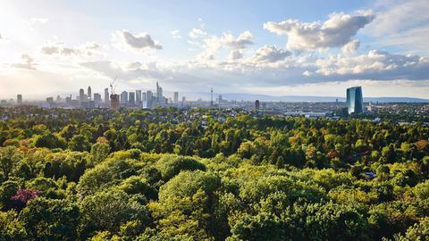 Blick über den GrünGürtel zur Skyline Frankfurt