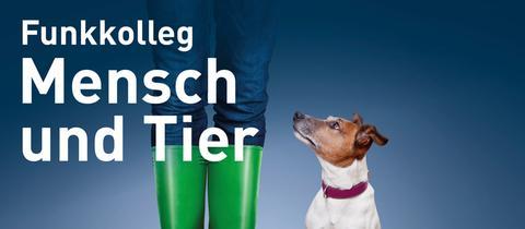 kleiner Hund sitzt neben Beinen in grünen Gummistiefeln vor blauem Hintergrund, davor das Logo von hrinfo