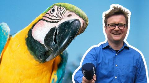 hr-Regionalreporter Mike Marklove mit Gelbbrustara