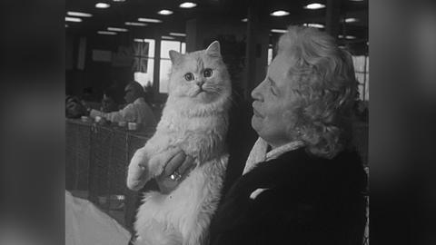 Ältere, gut angezogene Dame mit Locken hält auf der Katzenschau 1965 in Wiesbaden eine weiße Perserkatze auf dem Arm.