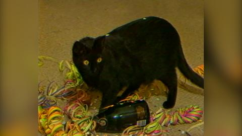 Ein scharzer Kater spielt auf dem Boden in buntem Konfetti und Luftschlangen neben einer leeren Sektflasche