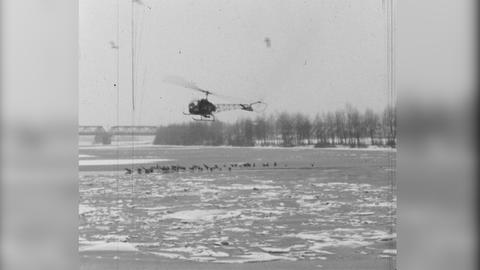 1963: Eine Luftbrücke für Wasservögel